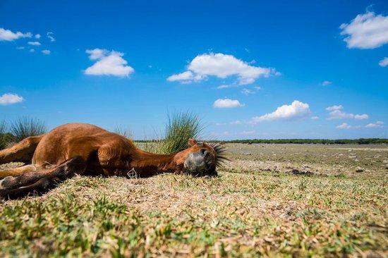 Giara di Gesturi - Escursioni a Cavallo