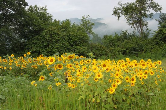 Pegasus Farm Campground: Sunflowers and Mountains on the Farm!