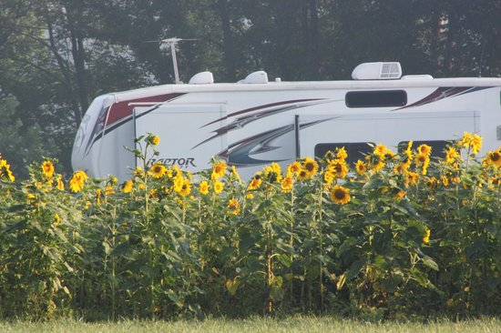 Pegasus Farm Campground: Sunflowers and RV on the farm.