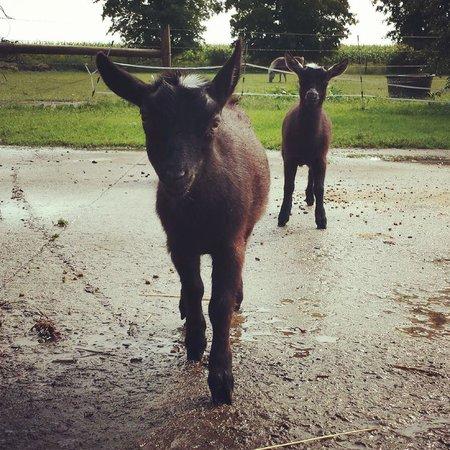 Inn BTween Farm Bed and Breakfast : Farm animals big and small