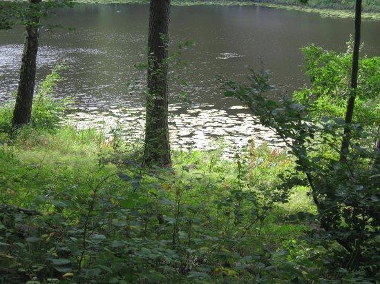 Klemensker, Dänemark: Rø Plantage, idyllisch schön
