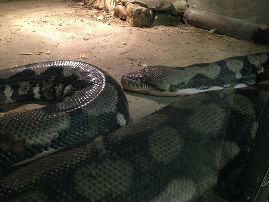 Animal Adventures: python