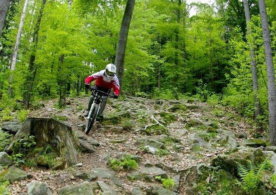 Hotel Bolfenk : Rock Garden in Bike Park Pohorje