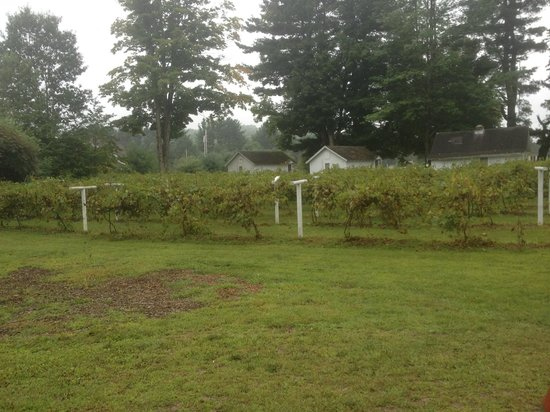 Cozy Cottages & Otter Valley Winery : view from front door of  cottage 21