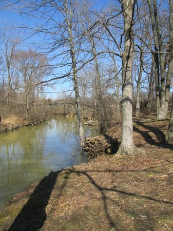 Jeffers Bend Environmental Center: The River at Jeffers Bend