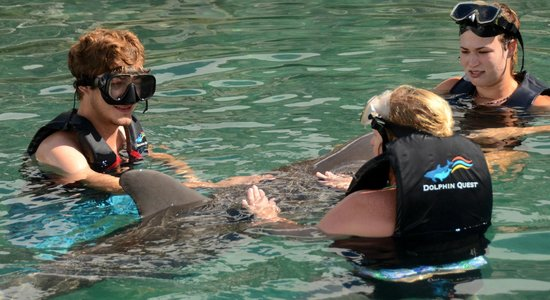Dolphin Quest: with Marley & Ely