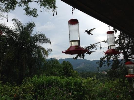 Yerette: hummingbirds