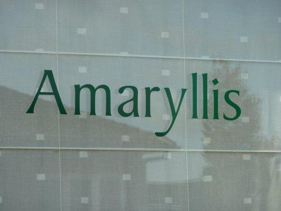 B&B Amaryllis : window