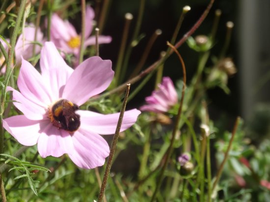 Bee-friendly haven at The Courtyard