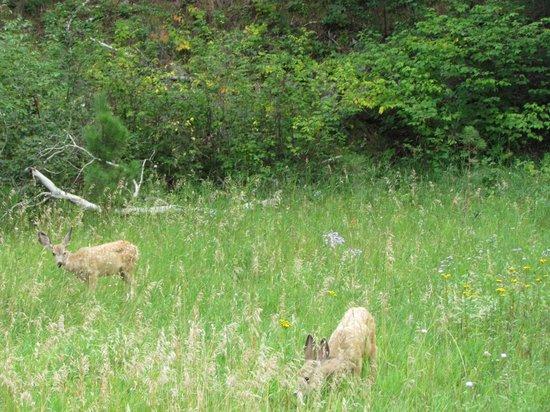 Kemp's Kamp : Deer nearby