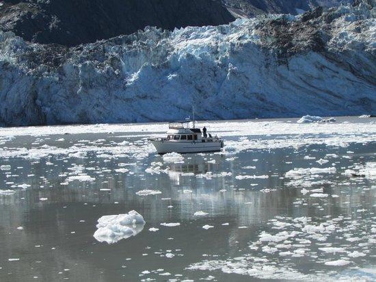 Glacier Bay Lodge: glacier in Glacier Bay