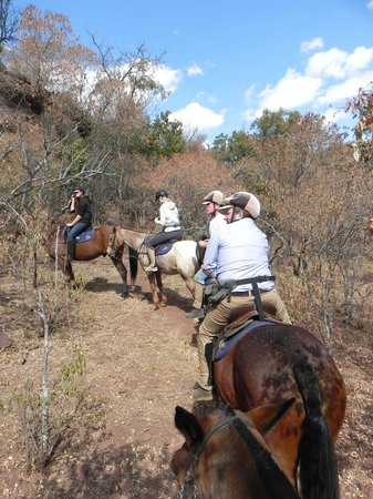 Catch me if you can - Bild von Horseback Africa, Pretoria ...