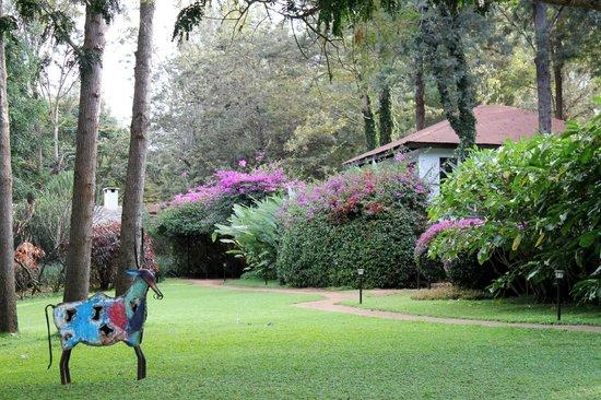 The Plantation Lodge & Safaris: garden