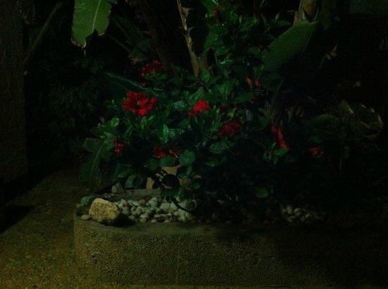 Alternative Space B & B: flowers in the garden