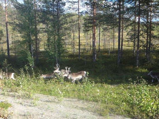 Matkailumaja Heikkala: находясь в коттедже вы будете чувствовать себя в единении с дикой природой