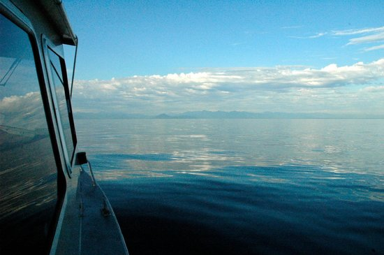 Steveston EcoTours: Out on the boat with Captain Bruce