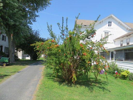Smith Island Inn : pomegranate tree on Smith island