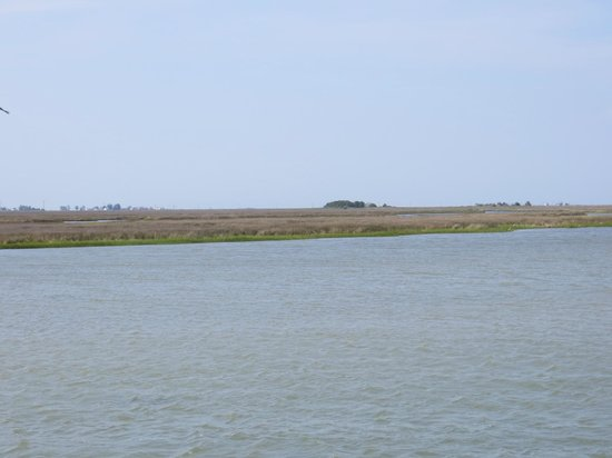 Smith Island Inn: marsh grasses and boat channel