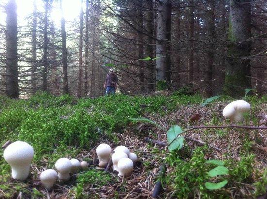 Gite du Maudit Francais: Aux champignons