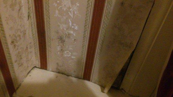 Belford Hostel: shocking damp