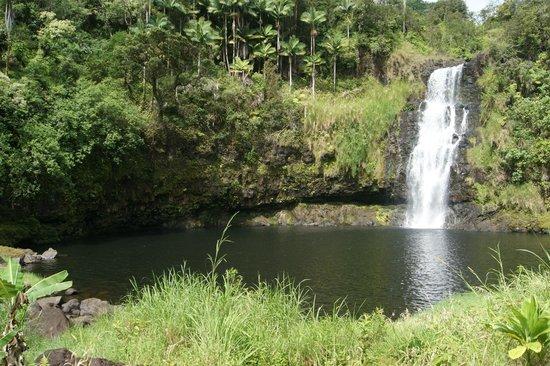 The Inn at Kulaniapia Falls : Nature's swimming pool
