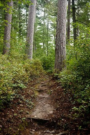 White Pine Camp: trail somewhere, can't remember