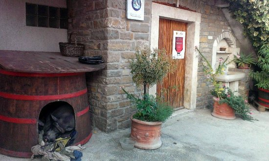 Agroturizam San Mauro: Pigs guarding the entrance to the winery