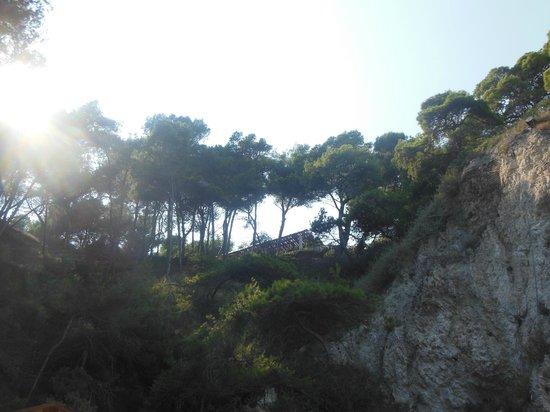 Escursione Isole Tremiti - LMA Navigazioni Srl : scogliera