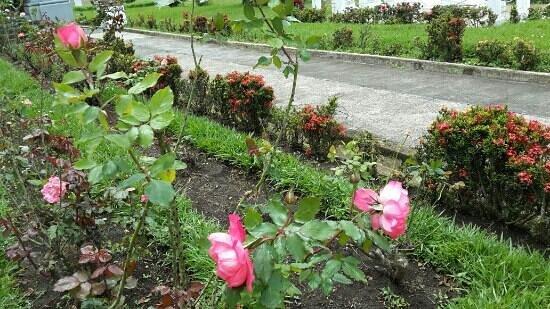 Rosas en el jardín de la Basílica de Santo Domingo - Picture ...