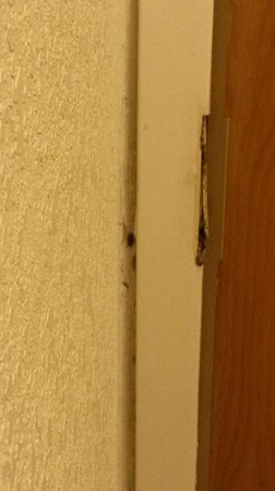 Days Inn Easley West of Greenville/Clemson Area : Extra Unwanted Guests