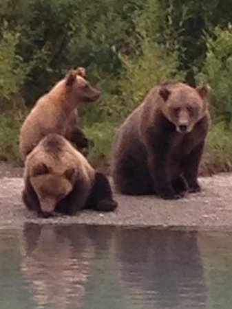 Alaska Fishing Lodge - Soldotna Bed and Breakfast Lodge: Added bonus to High Adventure fishing is the bear viewing