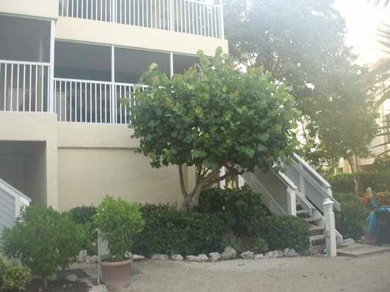 Tortuga Beach Club Resort : front view of a condo with underground parking to the left