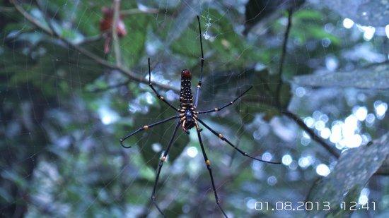 Khaoyai Nature Life & Tours: creepy