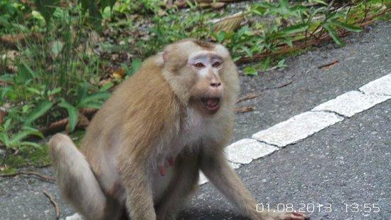 Khaoyai Nature Life & Tours: on the road