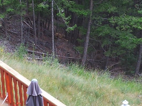 Rocky Mountain Springs Lodge and Restaurant: A deer close to the motel