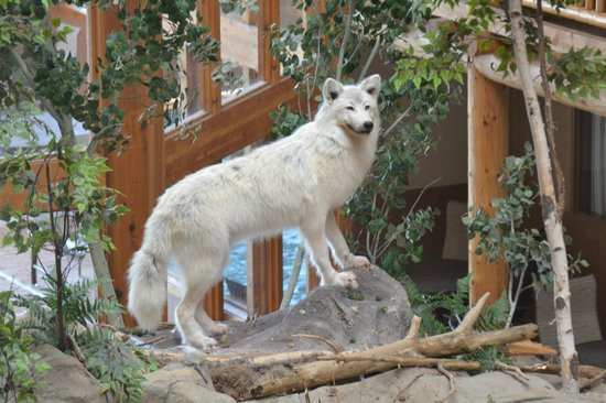 C'mon Inn of Casper: White Wolf, above the falls by the breakfast room & fish pond