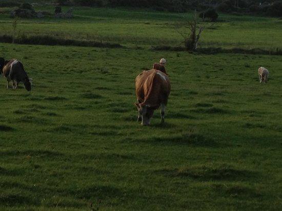 Cahergal Farmhouse: Pasture