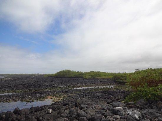 Galapagos Beach at Tortuga Bay : Тишина