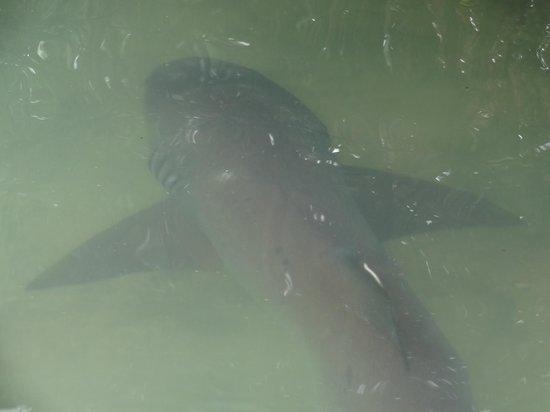Акулы почти у берега