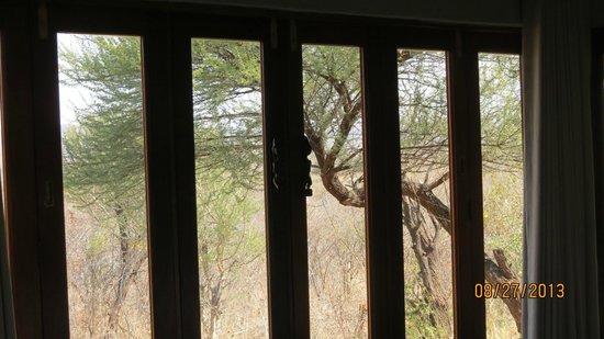 Madikwe Safari Lodge: The ceiling to floor windows/doors in our room, closed