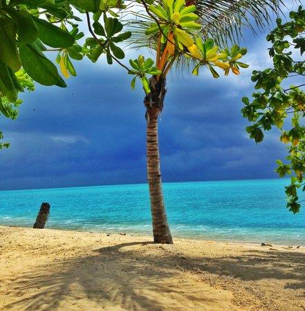 Sun Island Resort and Spa: вид на пляж с порога Бунгало
