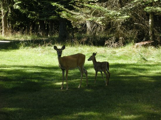 Island View Resort: Deer in the resort