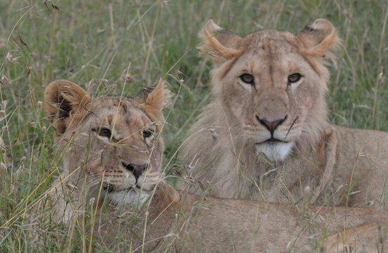 Porini Rhino Camp: Mama simba and cub on the Ol Pejeta Conservancy