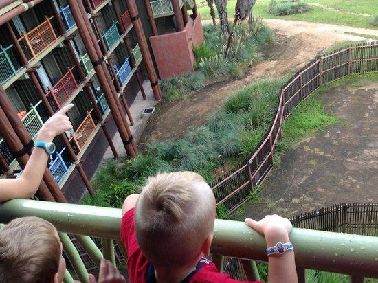 My son overlooking the Savanna view