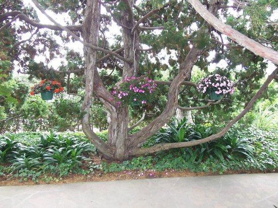 A Peaceful View Photo De Self Realization Fellowship Hermitage Meditation Gardens Encinitas