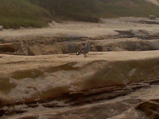 La Jolla Beach Travelodge : One of the Winan Sea Beach locals