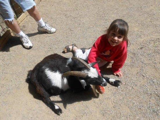 """Petting """"farm"""" at John Ball Zoo"""