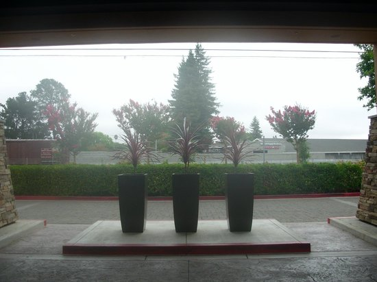 Napa Valley Marriott Hotel & Spa: Looking out the front doors - it was morning and a bit overcast - was a beautiful day however