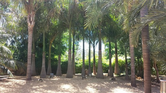Apartamentos El Palmeral de Madaria: The wonderful palms