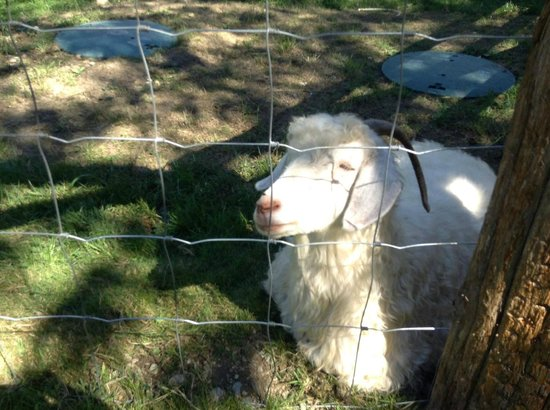 Kilby Historic Site: A Friendly Goat